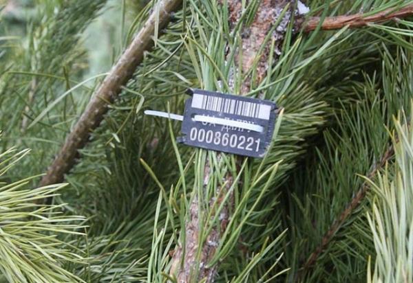 Новорічні ялинки: названі ціни та місця, деможна купити дерева