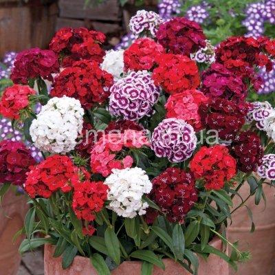насіння квітів високої якості